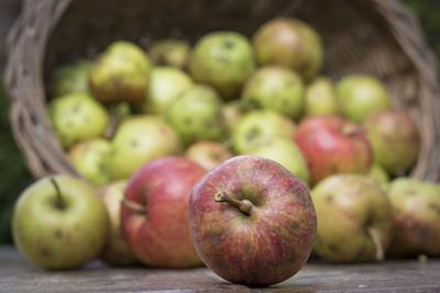 Boskop, Äpfel