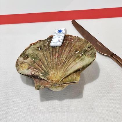 Jakobsmuschel mit Schale von der Deutsche See Fischmanufaktur